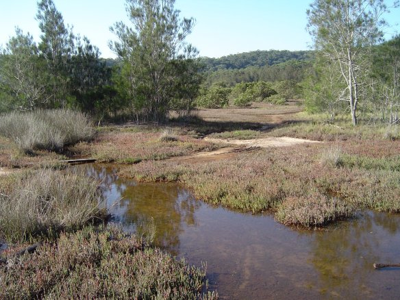 An example of saltmarsh habitats in Empire Bay, Central Coast, NSW