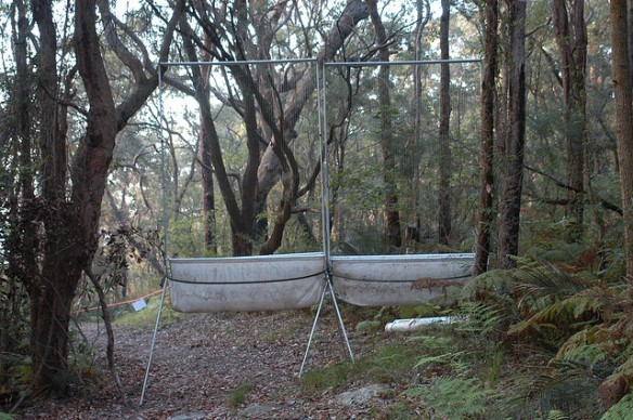 An example of a harp net set to collect microbats (Photo Doug Beckers)