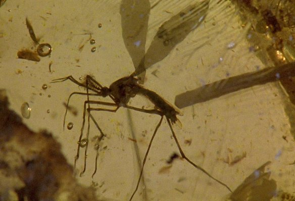 jurassicparkmosquito