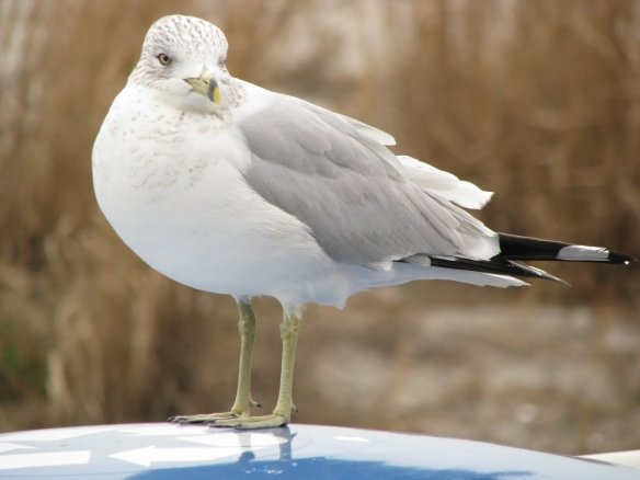 webb_bird