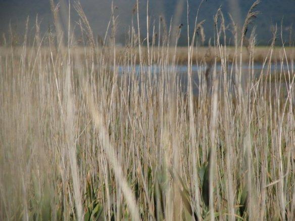 hexham_grassland