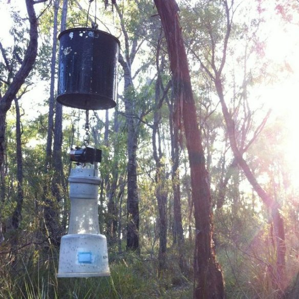Monitoring mosquitoes and the pathogens they're carrying will remain critical in assisting the assessment and management of public health risks in Australia