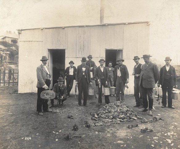 Professional Ratcatchers from Views taken during Cleansing Operations, Quarantine Area, Sydney, 1900