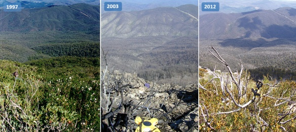 Bushfires are a natural part of the Australian environment and photography plays a key role in reminding us that our vegetation can respond remarkably after even the most intense fires (Source: CSIRO)
