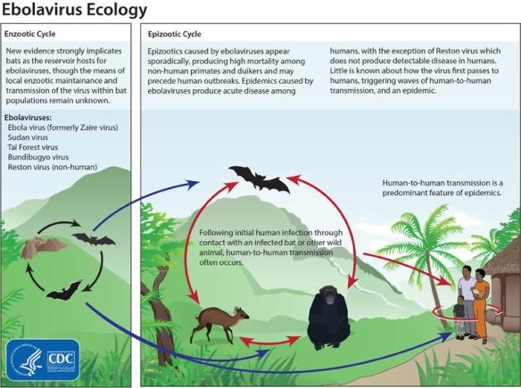 ebola_ecology_800px