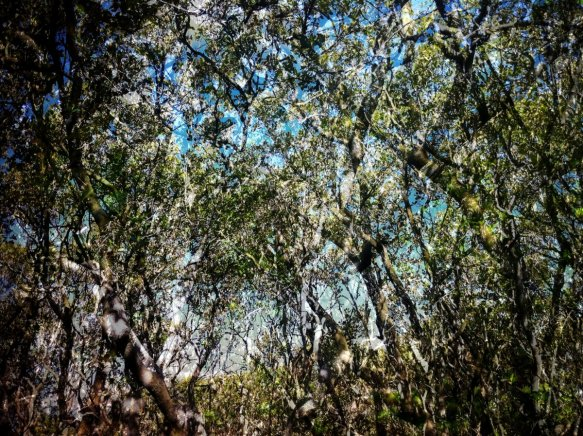 mangroves_webb_SOPA_November2015