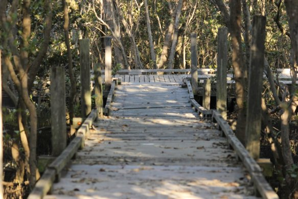 mangrove_boardwalk_Jan2016