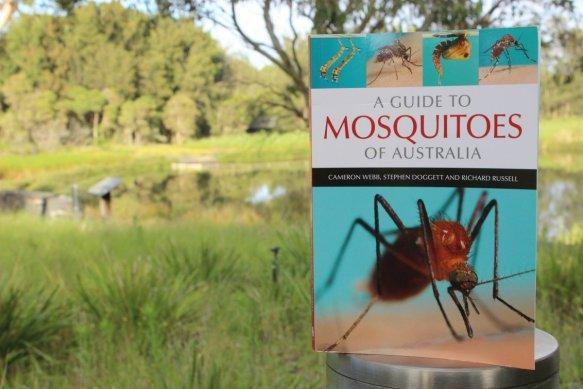 CSIRO_Mosquito